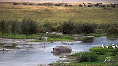 Ngorongoro Diversity (donte.hunter85) Tags: tanzania safari africa nature adventure lumixg9 lumix panasonic