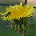 Photo#-248-Green Bug