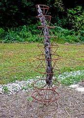 Le tronc cerclé (Diegojack) Tags: vaud suisse yverdonlesbains d500 nikon nikonpassion champittet jardin pronatura insolite