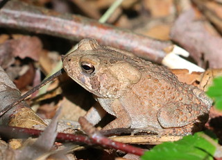 Toad at High Point/Kuser