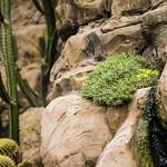 Bromeliaceae thumbnail