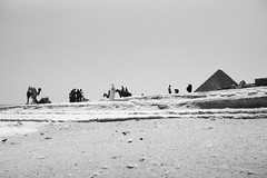 Giza (Dimitri Tenezakis) Tags: egypt giza pyramids architecture building monument ancient histrory archaeology people street streetphotography desert bw nb blackwhite noirblanc camel landscape