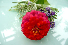 Late Summer Bouquet (WaterWinterWonder) Tags: flowers summer leaves lavender zinnia pink purple cuttings