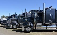 Kerden (quarterdeck888) Tags: trucks photos truckphotos australiantrucks outbacktrucks workingtrucks primemover class8 overtheroad interstate frosty quarterdeck jerilderietrucks jerilderietruckphotos flickr bdoubles lorry bigrig highwaytrucks interstatetrucks nikon truck kenworth kenworthclassic kk kenworthclassic2018 truckshow truckdisplay workingclasstrucks noprizes kerden legend t900 t950