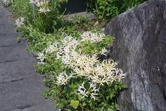 FS-DSC02717 (Hiroki Sawase) Tags: japan shizuoka sony a7rii 35mm f28