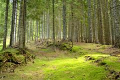 Hush (matteo.buriola) Tags: friuli alpi carniche carnia sigilletto wood forest green trees quiet landscape nikon d3100 path trail nature