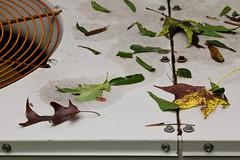IMG_0005 Courtesy of Florence (oldimageshoppe) Tags: leaflitter hurricaneflorence stilllife overcast latesummer
