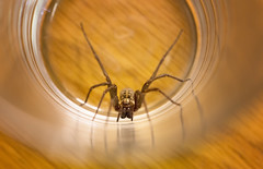 Bedroom visitor (Odd Jim) Tags: spider insect macro critter canon6d sigma105mm closeup