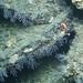 Coral-lined Ledges