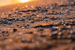 Muscheln und Bokeh - Sea shell and Bokeh (cgruenberg) Tags: sony 24105 blende4 strand muschel ostsee baltic sea shell zingst meer wasser bokeh