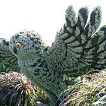DSC02128 - Snowy Owls thumbnail