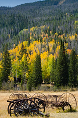 Season Changing (briarphotos) Tags: briarphotos nikond7000 nikkor3570mm aspen fallcolors rmnp