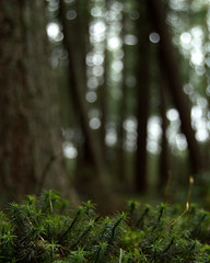 Big trees and little trees (AnneMarie Sharkey) Tags: nikond3200 woodland eliburn scotland nature dslr trees moss bokeh summer