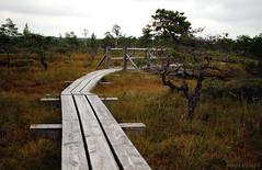 Ķemeri bog (KadKarlis) Tags: ķemeri bog swamp moor marsh latvia early morning photography riga jurmala nature wild outdoor landscape summer autumn fall beautiful scenery nikon d3000 prime lends lens