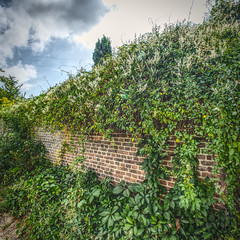 The Wall (enneafive) Tags: wall nature bricks gree red plants fujifilm xt2 hdr affinityphoto construction