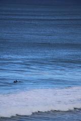 IMG_3643 (gervo1865_2 - LJ Gervasoni) Tags: surfing with whales lady bay warrnambool victoria 2017 ocean sea water waves coast coastal marine wildlife sealife blue photographerljgervasoni