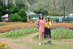 _DSC6426 (Quyr) Tags: dalat vietnam green smoke frog cloud tree forest langbiang lamdong portrait thunglungvang duonghamdatset