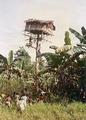 Album4-004d (Stichting Papua Erfgoed) Tags: pietvanmensvoort papuaheritagefoundation stichtingpapuaerfgoed papua irianjaya voormalignederlandsnieuwguinea