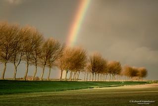 Regenboog kleurt de beregende polder - Hellevoetsluis/NL