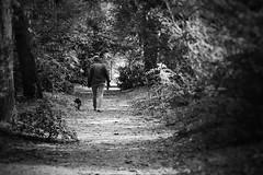 Au fond des sous-bois (LUMEN SCRIPT) Tags: dog people perspective forest woods vanishingpoint guidinglines monochrome nikond3300