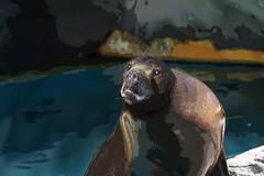 León marinoso (seguicollar) Tags: imagencreativa photomanipulación art arte artecreativo artedigital virginiaseguí leónmarino transformación oso surreal surrealismo surrealista cabezaoso agua water ojos cara faz rostro nariz boca