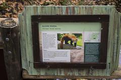 Red Panda signage (kevinvarzoos) Tags: exhibit rotterdam zoo diergaarde blijdorp panda