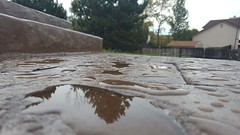 September 2, 2018 - Water droplets on a Thornton patio. (Anika H)