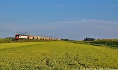 E191 002 (MattiaDeambrogio) Tags: e191 vectron transcereals tramogge vespolate risaia fuorimuro inrail merci freight train treno