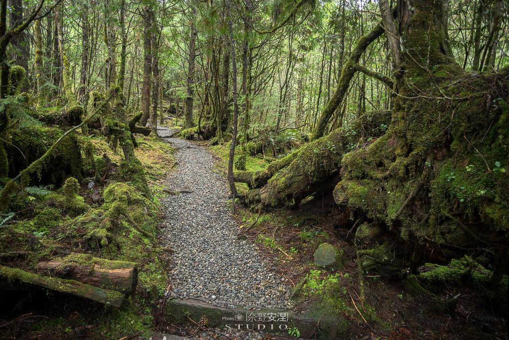 太平山翠峰湖環山步道 |走在泥濘的道路上,只為途中美景 | 宜蘭大同鄉50
