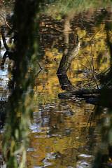 2C/2 (vizero) Tags: wasser watermeau spiegelung reflexions herbst autumn fall