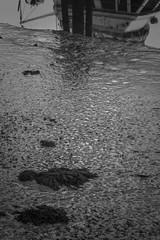 mud, low tide, reflections, harbor, near dusk, Thomaston, Maine, Nikon D3300, mamiya sekor 80mm f-2.8, 9.12.18 (steve aimone) Tags: harbor mud lowtide reflections dusk thomaston maine nikond3300 mamiyasekor80mmf28 primelens monochrome monochromatic blackandwhite midcoast shoreline