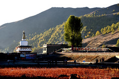 Yading Red Meadow 亞丁紅草地 (MelindaChan ^..^) Tags: yading sichuan china 四川 亞丁 chanmelmel mel melinda melindachan 紅草地 稻城 nature autumn red meadow grass weed lake mountain riwatown