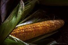 Corn'd (RashmiVarier) Tags: freshwork food corn vegetable moody naturallight nikon