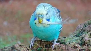Bird - 5906