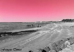 Pink !!! (François Tomasi) Tags: châtelaillon françoistomasi tomasiphotography yahoo google flickr rose pink