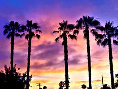 palm soft sky (moonjazz) Tags: sky pastel colors trees california classic sunset photo palmsprings twilight pink blue palms five cinco silhouette beauty moonjazz southerncalifornia skinny hues