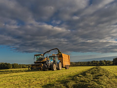 3rd cut grass (Alan10eden) Tags: silage cut grass harvest chop trailer tractor haulage selfpropelled chopper newholland cruiser field swath wilt dry ryegrass winterfeed machinery farm agriculture farmer ireland dairyfarm alanhopps canon 80d sigma 1770mm lift cork 3rdcut wilted highdrymatter