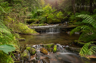 Svee Creek