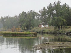On a cold summer day with mist and drizzle (annkelliott) Tags: calgary alberta canada inglewoodbirdsanctuary nature landscape scenery naturalarea trees water lagoon pond building structure house nearcolonelwalkerhouse reflections outdoor summer overcast cloudy cold misty drizzle filteraddedinpostprocessing 15september2018 canon sx60 canonsx60 annkelliott anneelliott ©anneelliott2018 ©allrightsreserved