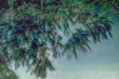 BuckDreams (jmishefske) Tags: 2018 antler nikon rack d500 whitetail wildlife buck september deer