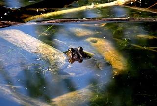 September frog