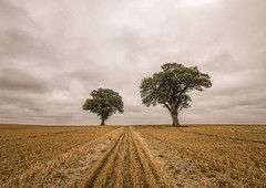 Just the two of us (grbush) Tags: tree lonetrees landscape minimalism minimalist northamptonshire england countryside rural farm agriculture oaktree clouds harvest sonyilce7 tokinaatx116prodxaf1116mmf28