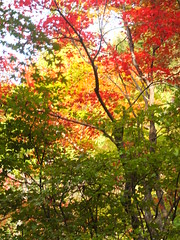 a (32) (hiromi89) Tags: japan beauty beautiful scenery flower wood pond