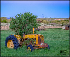 Hybridization ) (Enrico Moser) Tags: hybrid tree pasture agriculture yellow