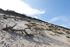 Cliffside by Heatherhill, Denmark (mistermacrophotos) Tags: driftwood canon 5d mk4 sand sky beach coastline landscape steep dramatic wide wideangle tree branches clouds horizon looking up shadow dunes