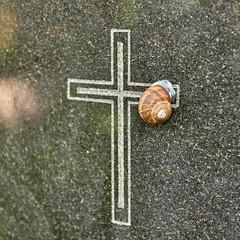 Snail on Gravestone, Lviv (otto_m1) Tags: lviv lvov lemberg