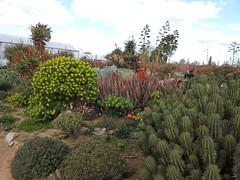 Cactus Country, Strathmerton 1433 (Lesley A Butler) Tags: victoria strathmerton cactuscountry cacti australia