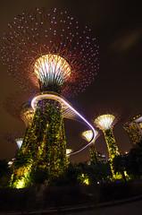 Singapore Super tree groove in Gardens by the bay