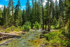 Beautiful Indian Creek (http://fineartamerica.com/profiles/robert-bales.ht) Tags: fineart flickr forupload haybales idaho people photo photouploads places priestlake projects river scenic stateparks states unitedstates lake water forest landscape blue boating colorful priest bay solitude recreation priestslake picturesque photography northern fishing mountain cloud idahopanhandle beauty horizontal vacations travel panoramic tourism robertbales mountainlake beautiful awesome magnificent peaceful wow stream creek mountains green grass hiking wilderness flowing indian