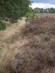 Heide (Jeroen Hillenga) Tags: drenthe heide heather netherlands nederland natuur nature natuurgebied natur landscape landschap hiking wandelen wandelaars
